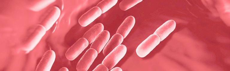 goede-lactobacillen-en-bacteriële-vaginose